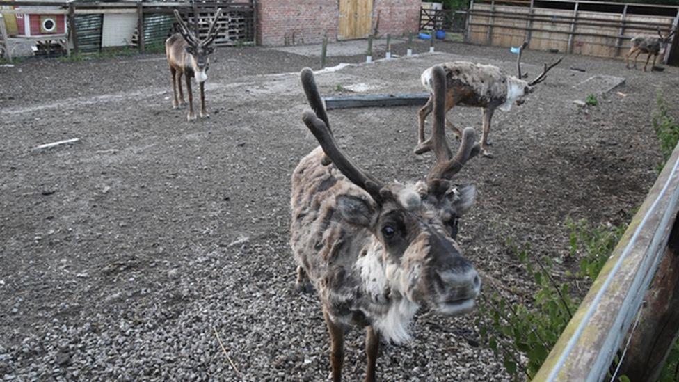 Cheshire Reindeer Lodge