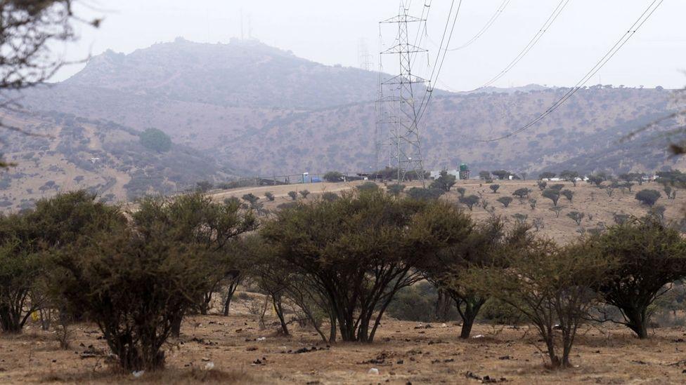 Pylons and avocado trees near the spot where Nicole's body was dumped