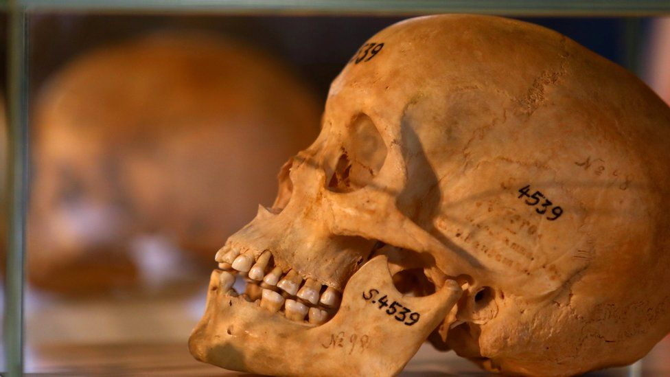 Germany returns skulls of Namibian genocide victims - BBC News