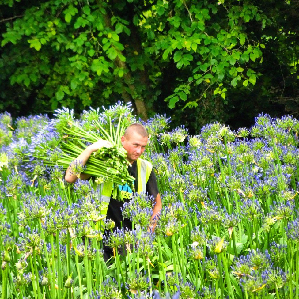 Flower picker in field