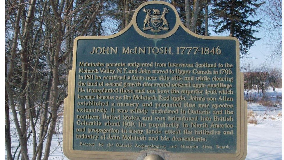 John McIntosh discovered the apple from saplings when he bought the farm in 1811