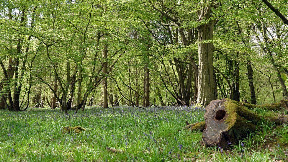 Astonbury Wood, Stevenage