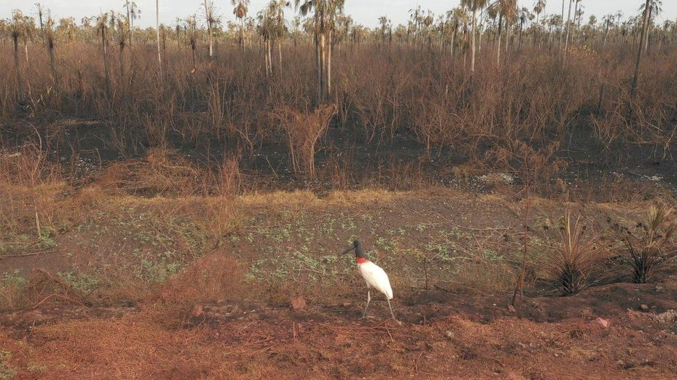 The Otuquis National Park, in the Pantanal area of Bolivia, was damaged in fire last year