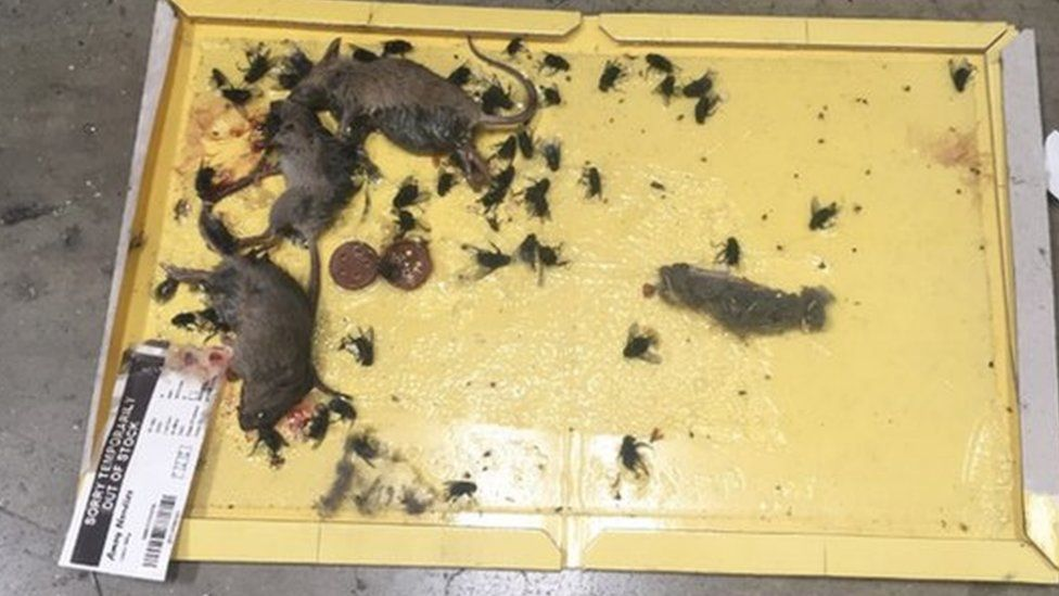 Dead mice and flies