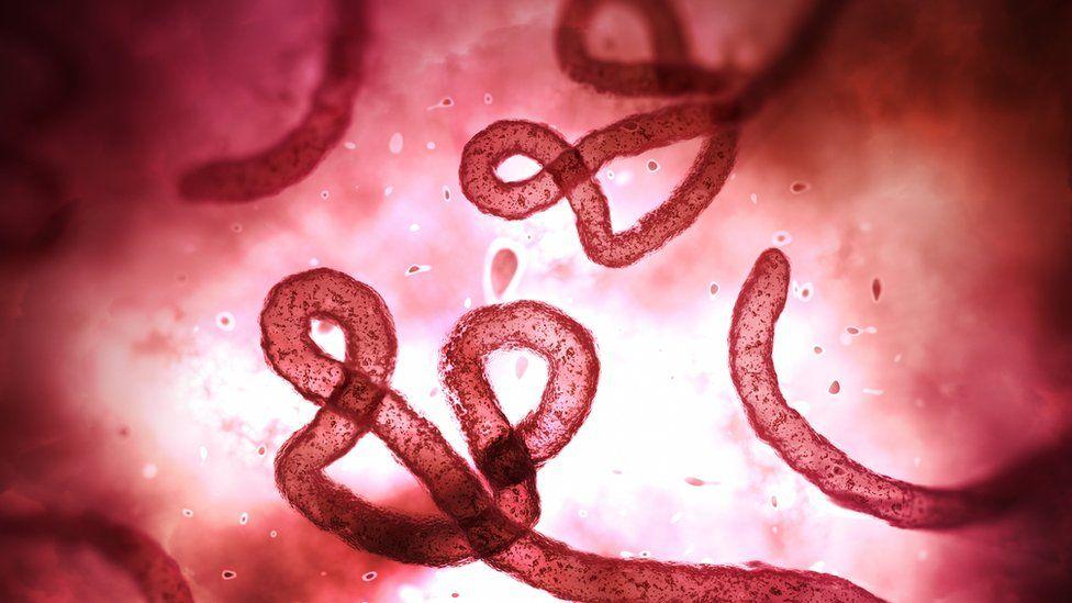 Ebola virus under a microscope