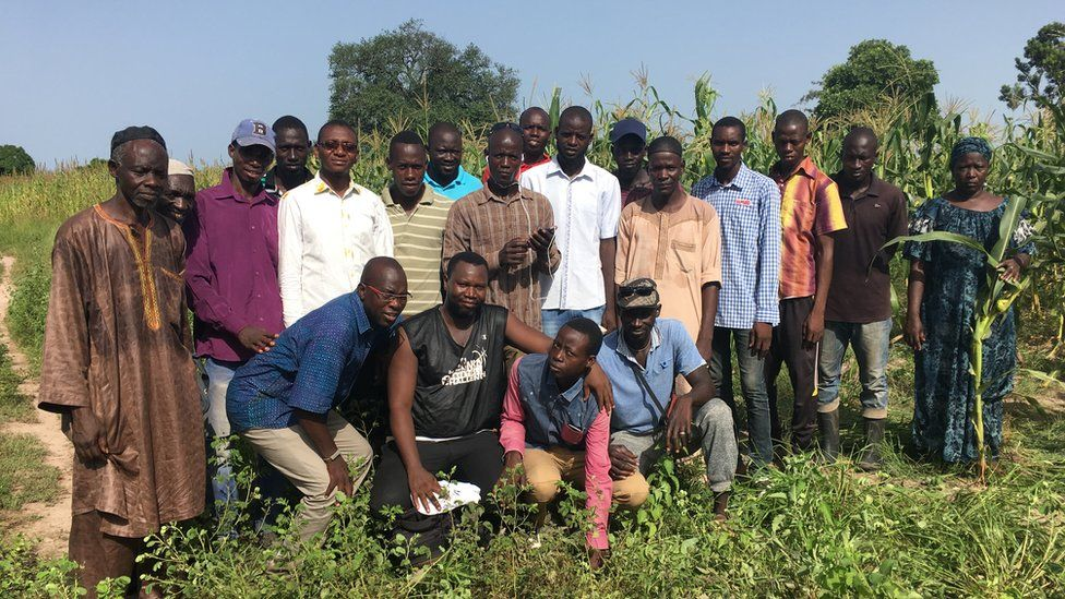 Workers on a maize farm in Senegal
