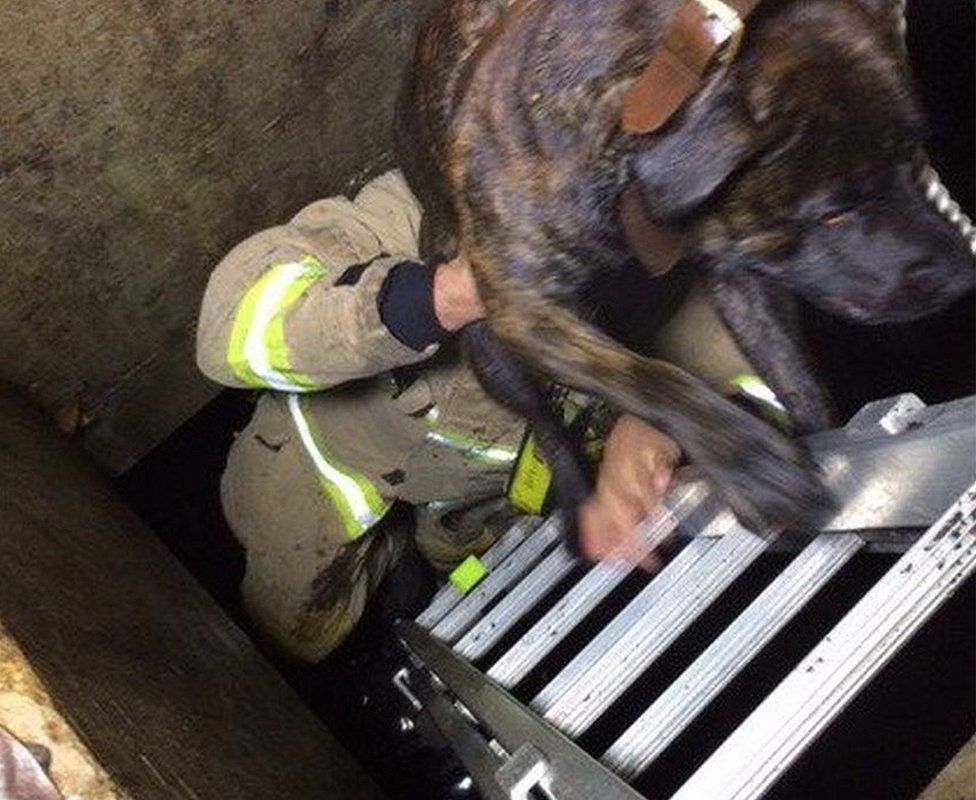 Dog being rescued by a fire fighter
