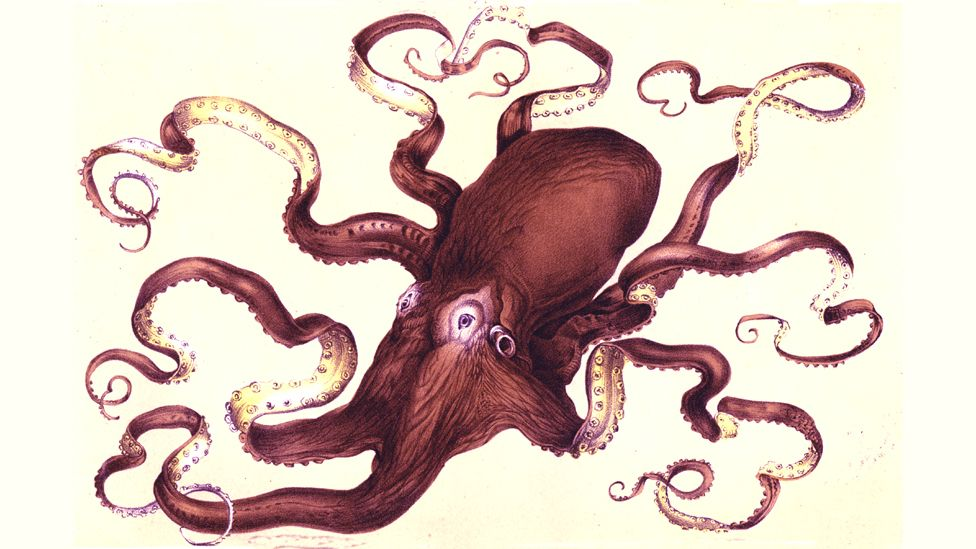 The octopus from the Crystal Palace aquarium