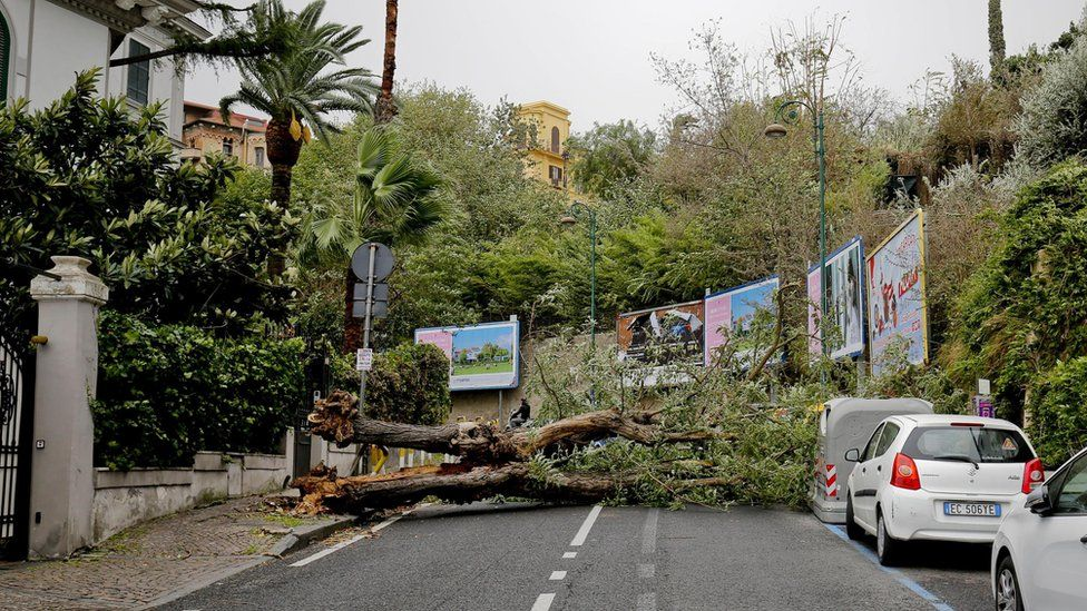 A view of a fallen tree at a street after strong winds hit Naples, southern Italy, 29 October 2018.