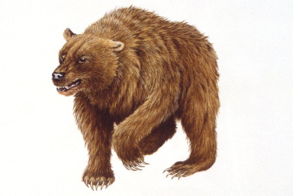 Artist's illustration of the cave bear