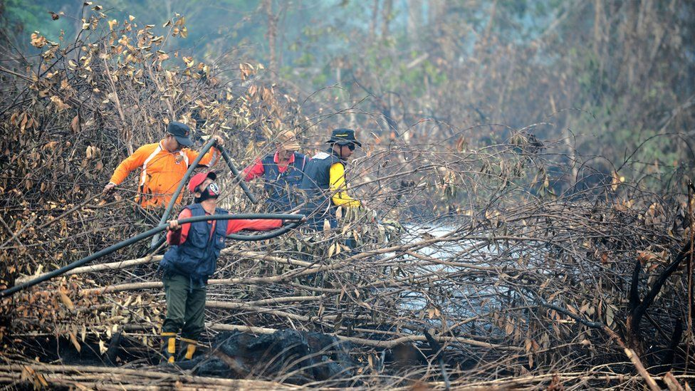 Fire fighters try to put out fires in forest and peatlands surrounding Palangkaraya city in Central Kalimantan.