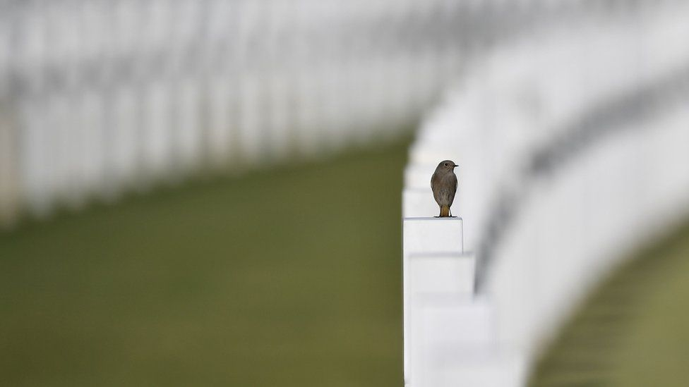A bird stands on a white cross at the Sicily-Rome American cemetery in Nettuno on 2 November 2017. Pope Francis will celebrate a mass at the cemetery today and will visit the Fosse Ardeatine monument in Rome, the site of a mass execution in which 300 Italian civilians were killed by Nazi troops in 1944.