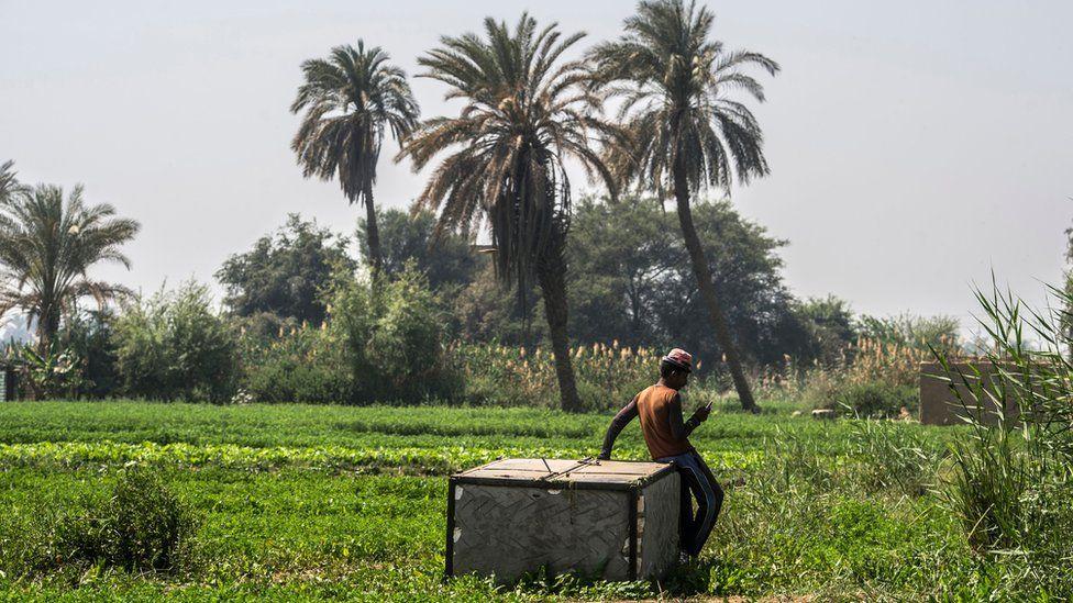 An Egyptian farmer uses a smartphone to access useful crop data