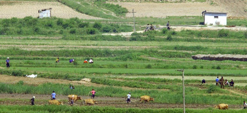 North Korean farmers work on a field near the border village of Panmunjom, north of Seoul, 02 June 2004.