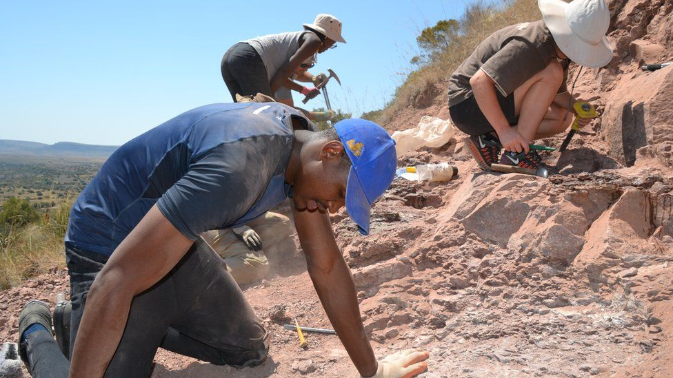 A team of palaeontologists working on a dig