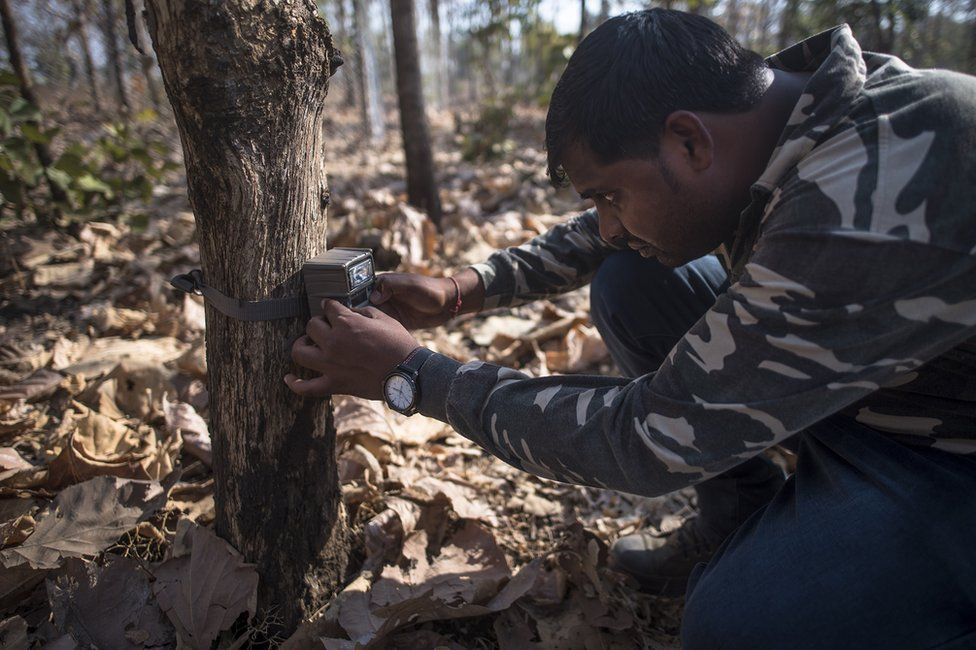Camera traps for tigers
