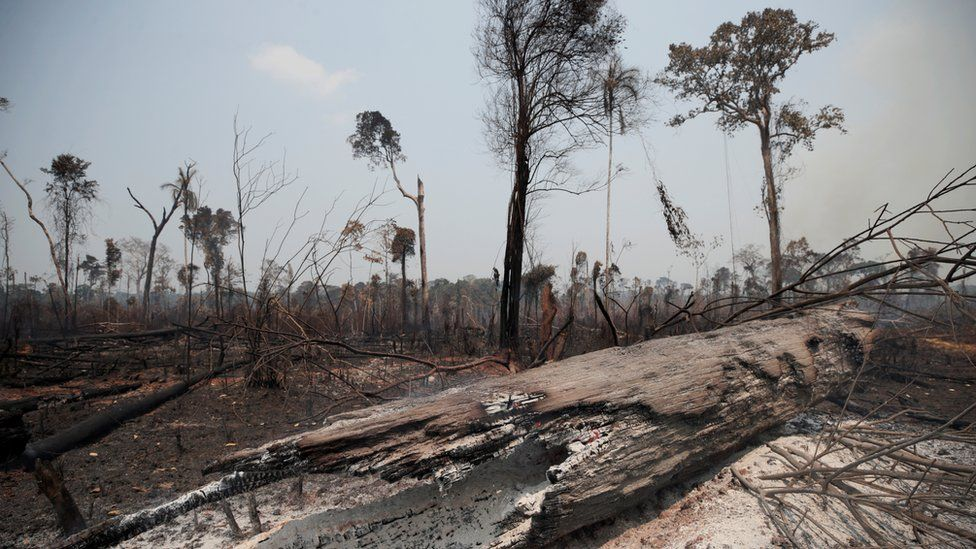 Charred trunks are seen on a tract of Amazon jungle, that was recently burned by loggers and farmers, in Porto Velho