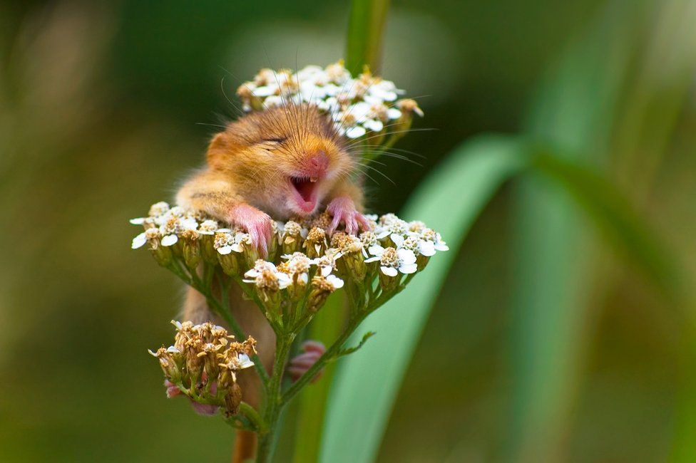 Mouse                                                          smiling whilst                                                          sitting on a                                                          flower
