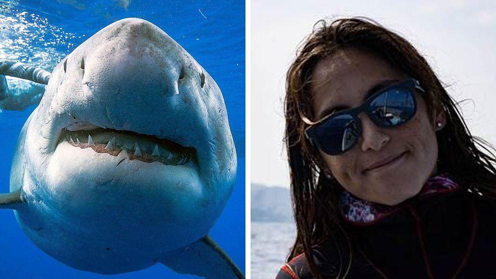 shark com