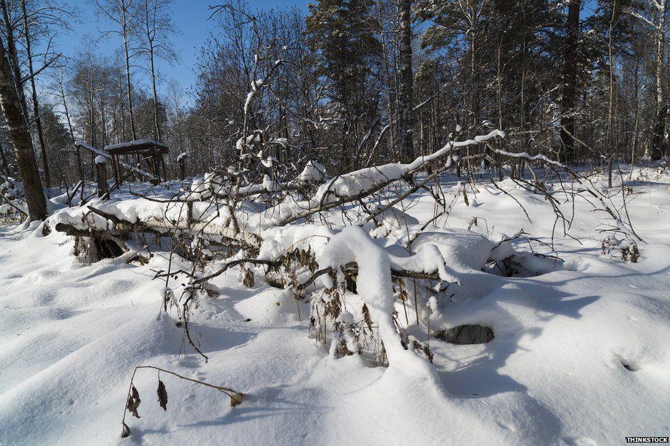 Snow in Siberia