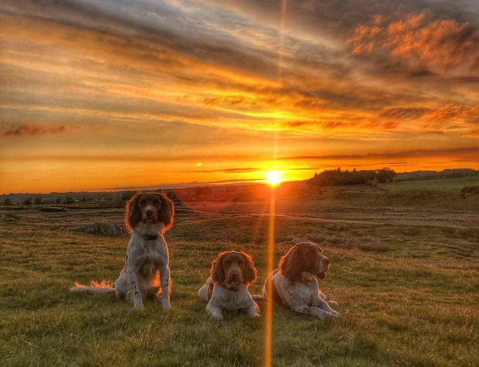 The dogs at sunset