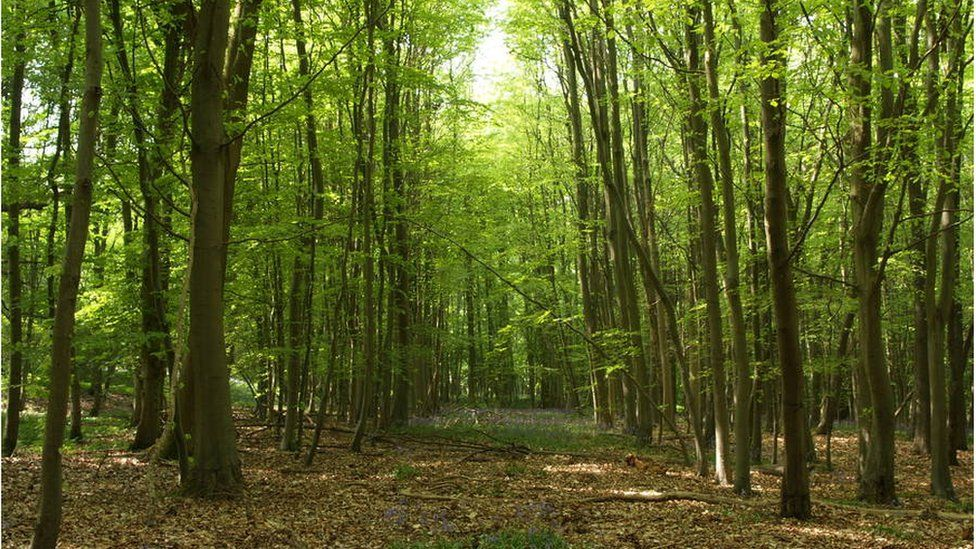 Urban woodland (Image: City of Trees)