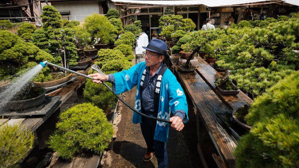 A staff member waters Bonsai in Saitama, Japan.