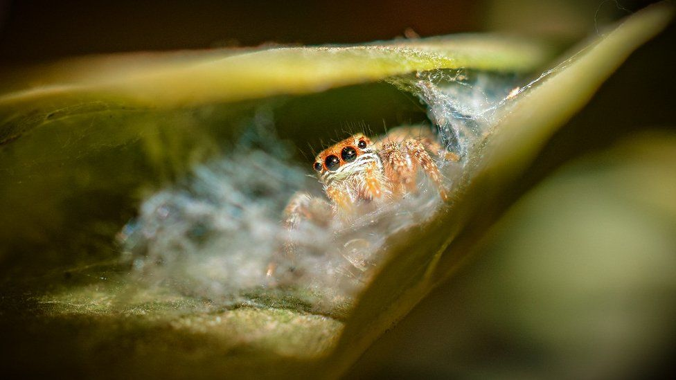 A spider on a leaf