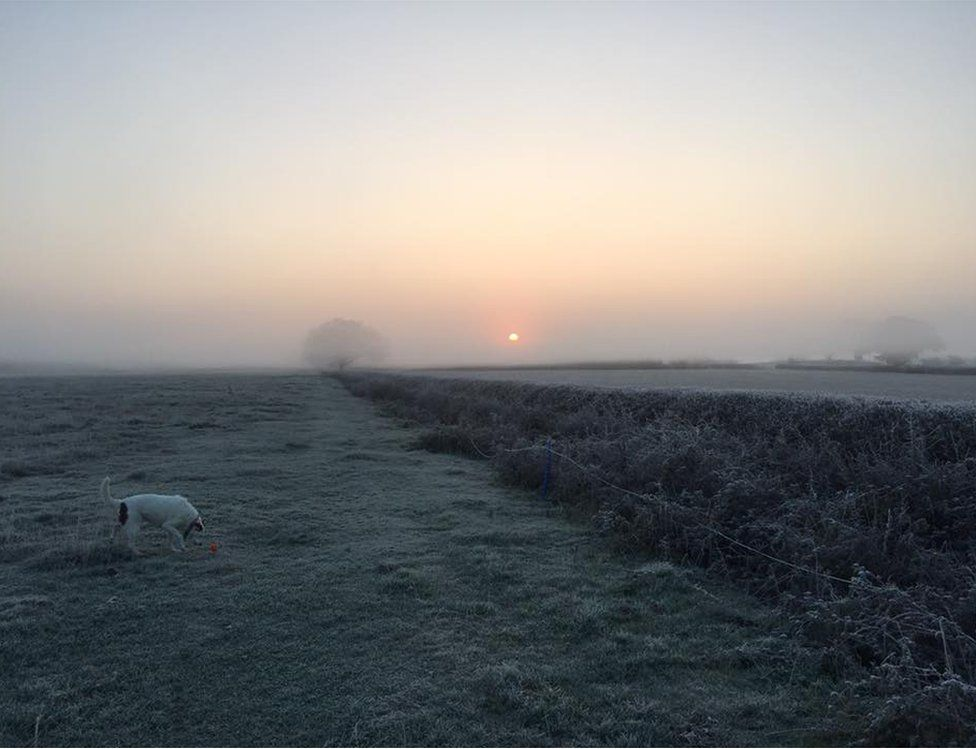 A dog eating grass on a frosty morning