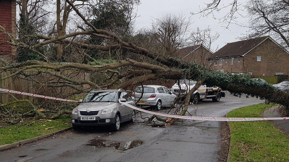 Fallen tree in Burgess Hill, West Sussex