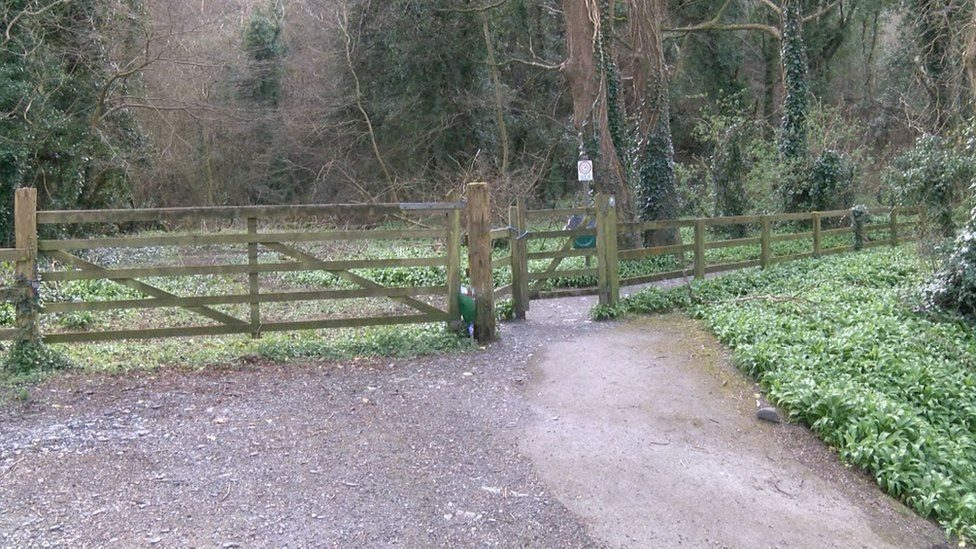 Woodland at Ramsey Hairpin