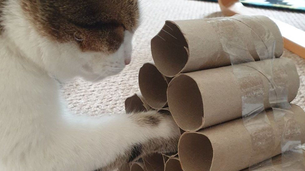 Cat with toilet roll toy