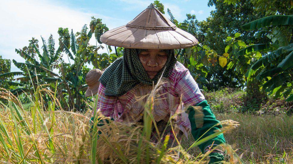 Farm worker Myint Tin