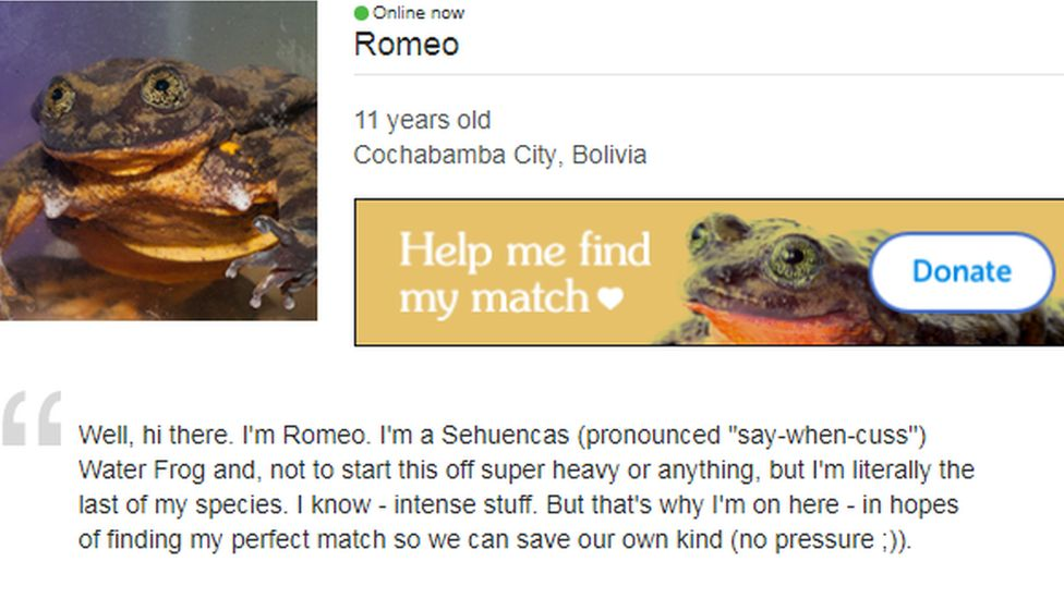 A screen grab of Romeo's online dating profile