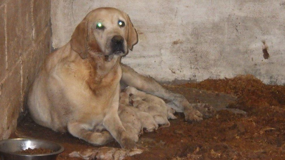 """A dog being kept in """"horrific"""" conditions"""
