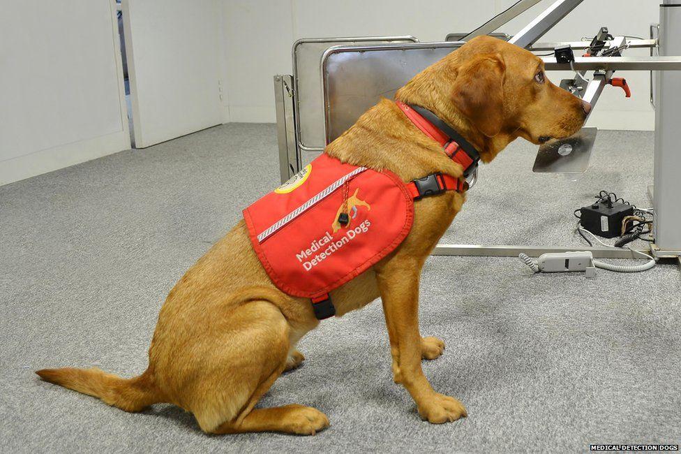 Medical dog