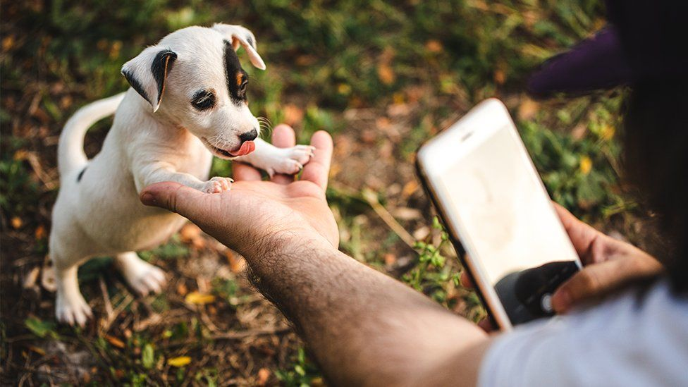A tiny puppy being photographed