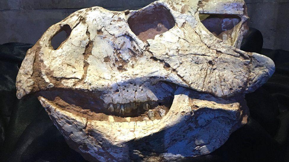 Protoceratops from the Umnugovi province