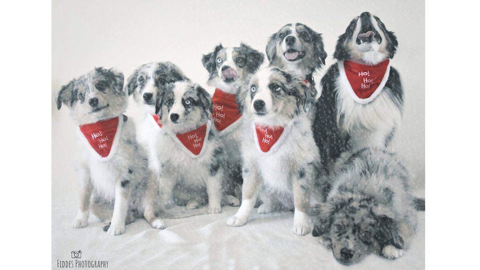 Back row left to right: Bruce, Apollo, Nova, Boomer. Front row left to right: Mars, Aquila, Nellie, Skippy