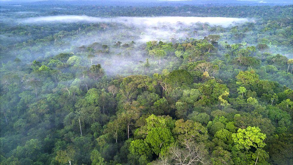 Facebook to act on illegal sale of Amazon rainforest thumbnail