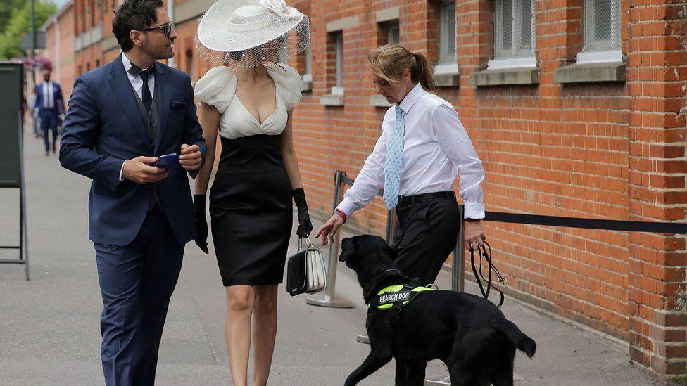 женщина-полицейский с розыскной собакой и гости Аскота