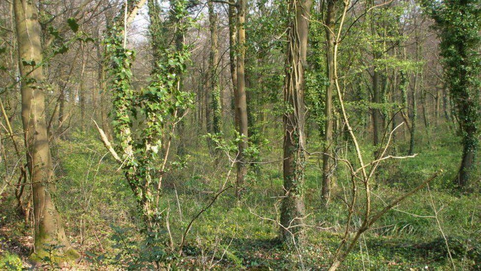 Leckwith Woods