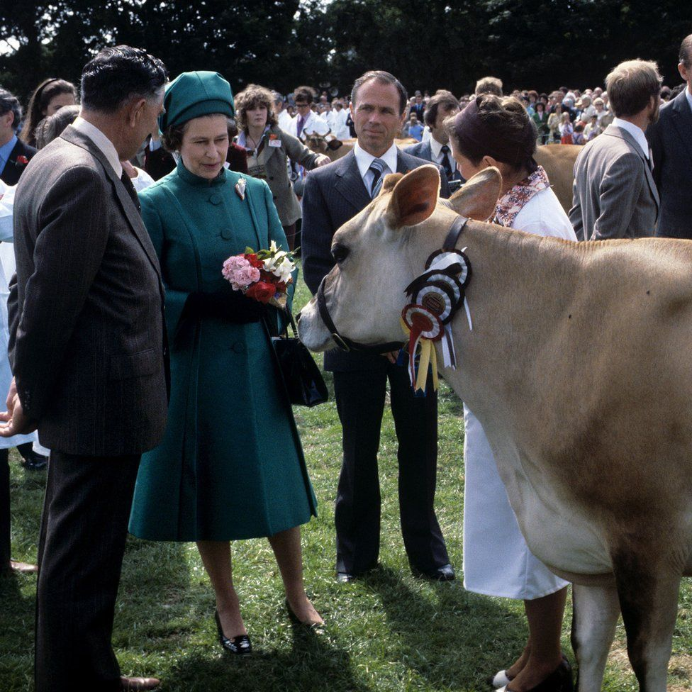 Queen Elizabeth II with a Jersey cow presented to her with at the Country Show at Le Petit Catelet, Saint John, Jersey.