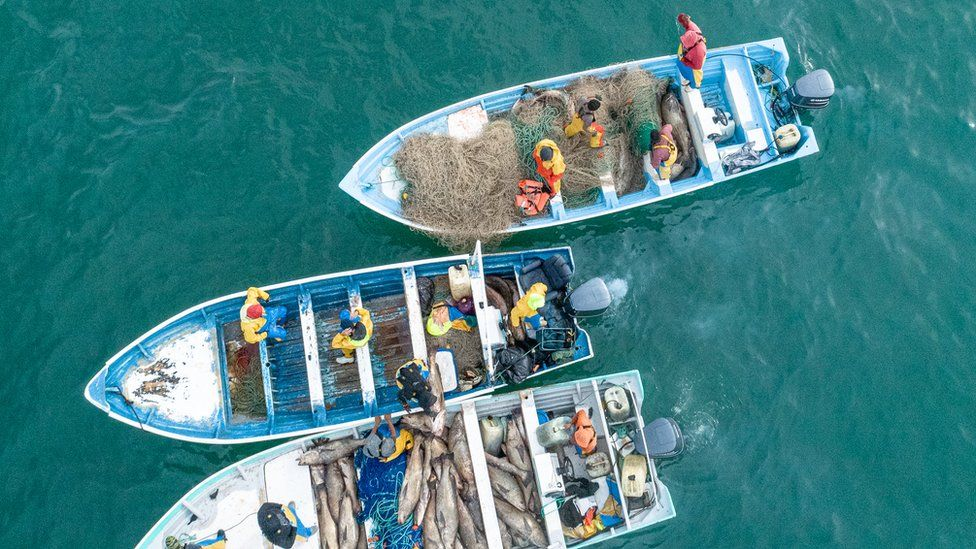 Boats carrying totoaba
