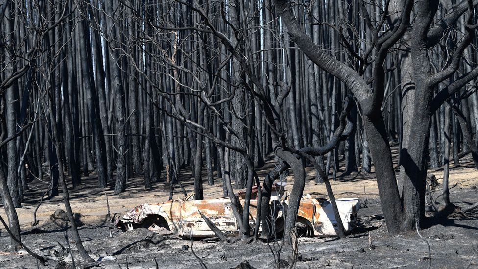 Fire damage in Kangaroo Island