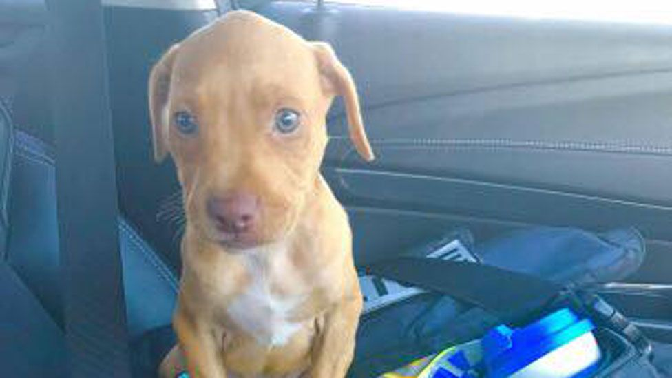 A puppy freed from a hot car by police