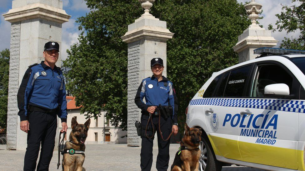 This handout photo from Madrid's police force shows two dogs and their uniformed officers next to a police car.
