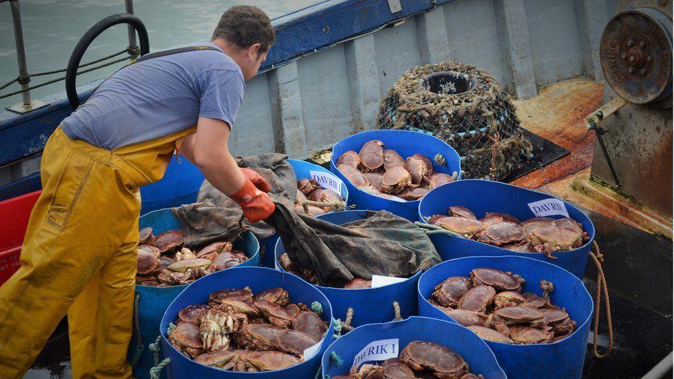 Crab exporter