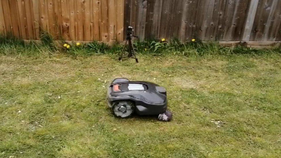 Hedgehog study to assess danger of robot lawn-mowers - BBC News