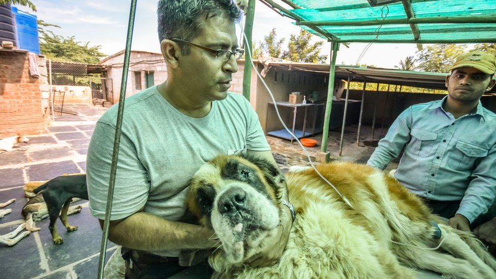 Dog getting treatment